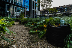 Potager Urbain #06 Engie Towers Brussels  / Août 2019
