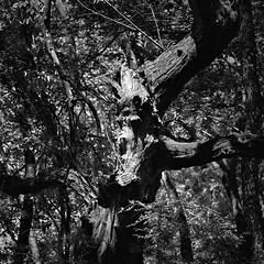 A very angry tree....