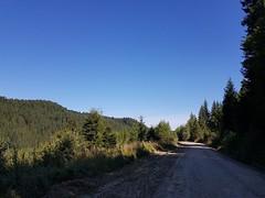 Drumul forestier Bâsca Mare