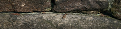 Common Lizards (5)