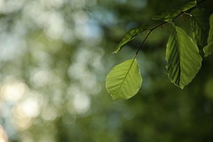 Bokeh in a forest