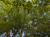 Photo:Trees, Yoyogi Park (代々木公園), Tokyo By