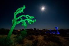 Light Painting at Joshua Tree National Park