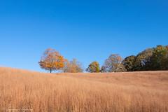 Autumn meadow - Westchester, New York
