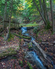 Forest Stream at Iargo Springs
