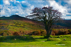 The magic of Dartmoor (Devon)