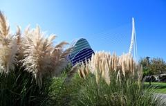 Agora / El Pont de l'Assut de l'Or / Ciutat de les Arts i les Ciències / Valencia