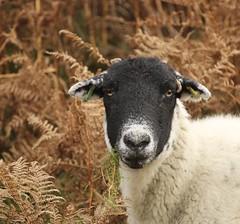 What ewe looking at?