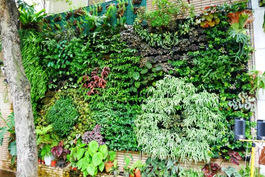 [桃園美食]Vittaria Café 書帶蕨|綠色植生牆充滿綠意~藝文特區旁.同安親子公園 @VIVIYU小世界