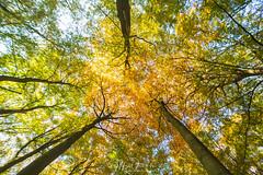 Autumn Delight I