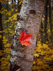 Captured Leaf
