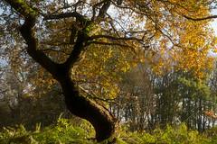 Autumn #3. Twisted Tree