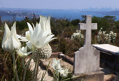 Cemetery on North Head