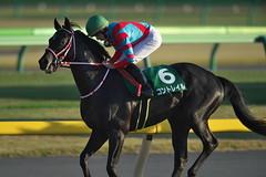 Contrail -Tokyo Sports Hai Nisai Stakes (G3)