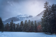 Forest, snow & mountains