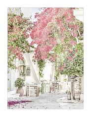 2539hb Autumn in Halki (1)