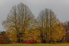 Autumn at Hove 2