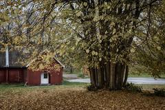 Autumn at Hove 4