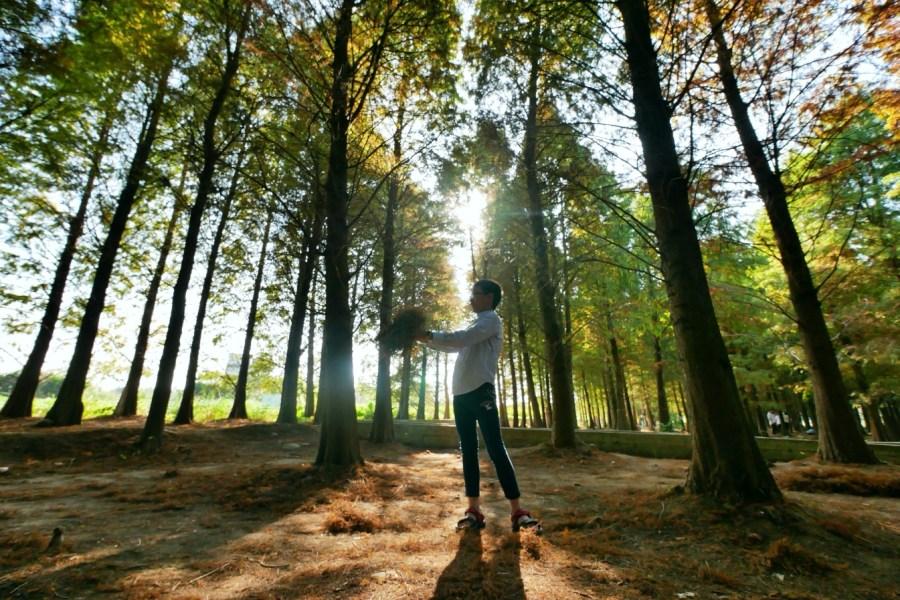 免費景點,八德景點,八德落羽松森林,冬天景點,國內旅遊,桃園免費景點,桃園旅遊,桃園景點,無料景點,落羽松,限定景點‧宛如置身國外的美麗場景,霄裡大池 @VIVIYU小世界