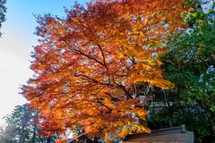 紅葉 -autumn colors-
