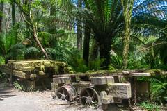 Logging remnants