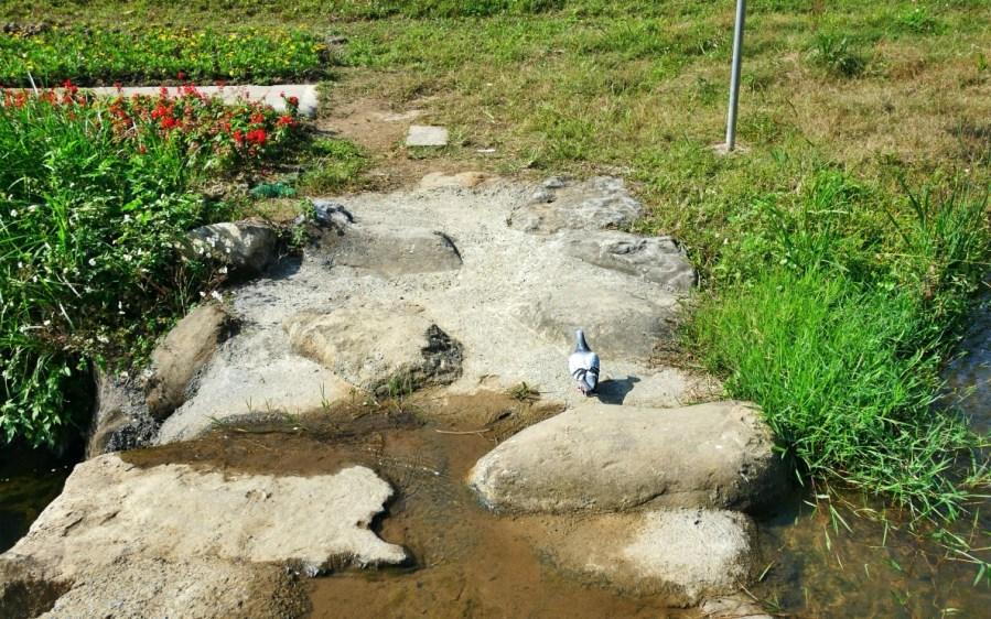 [台北旅遊]大溝溪生態治水園區|農曆年前的萬株花海~彩色花毯與鯉魚山形成如畫般美景 @VIVIYU小世界