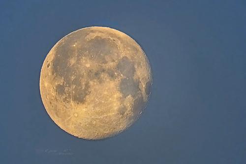 Dawn Moon