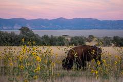 Antelope Island State Park, Great Salt Lake