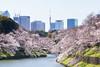 Photo:Sakura By