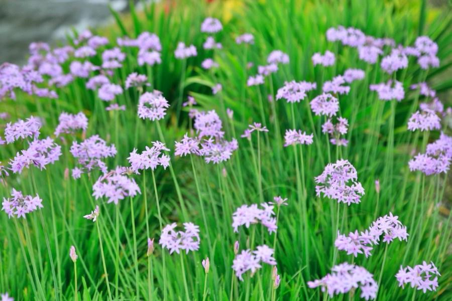 [台中旅遊]中社觀光花市花海|歐式花園造景~一年四季會有不同的花朵盛開.很適合拍照的景點 @VIVIYU小世界