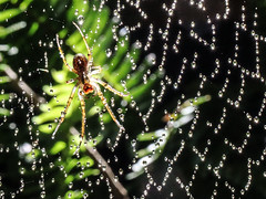 Jewels on the web