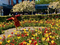 Tulip Festival in Amsterdam