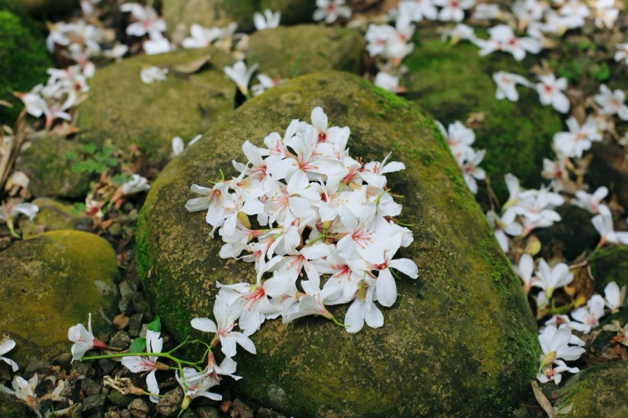 [苗栗旅遊]台灣客家文化館&好客公園|免費景點~五月雪油桐花正盛開.夏雪地景藝術裝置 @VIVIYU小世界