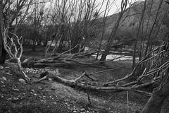 Bosque muerto Peñaflor