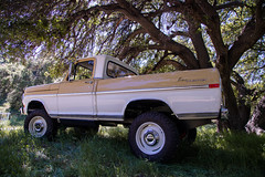 ICON_Ford_70_Reformer_34_Low_Shade_Under_Tree_IMG_9590