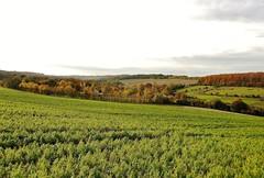 Fawkham Valley, Longfield