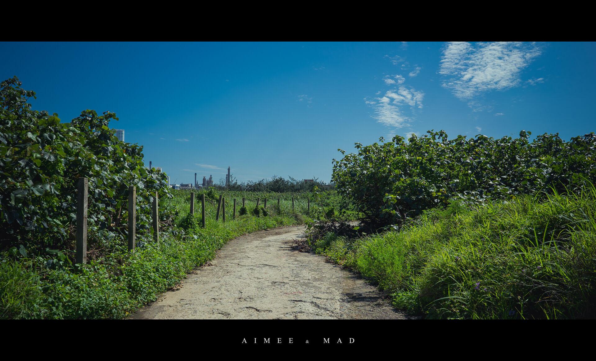 草螺,白千層林道,五陽高架夜景