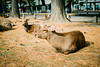 Photo:Nara Park By