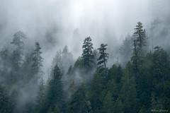 Unconverted Wilderness