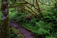Rickety trail