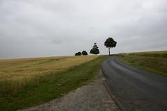Quelques arbres pour décor