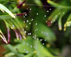 Raindrops on Web