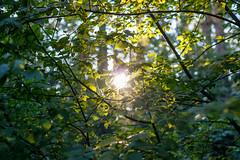 Sunshine through the foliage