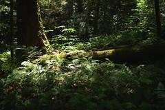 Summer trails