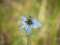 Beautiful single flower in a meadow