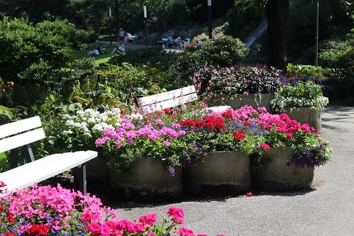 "Planten un Blumen Garden - Hamburg, Germany • <a style=""font-size:0.8em;"" href=""http://www.flickr.com/photos/104409572@N02/50207431072/"" target=""_blank"">View on Flickr</a>"