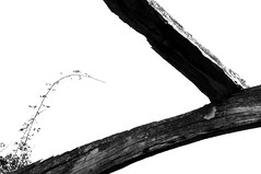 A silva - José Luis Diz