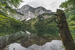 Lakeside Reflections