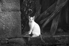 Queda o gato - Juan Rúa