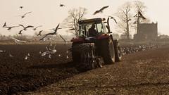 Spring ploughing near Burscough